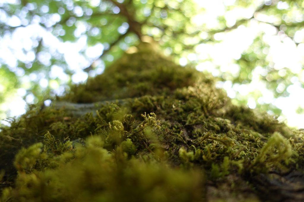 Tree in Victoria BC