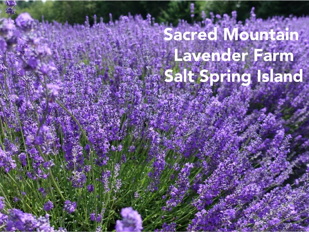 Sacred Mountain Lavender Farm Salt Spring Island